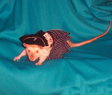 Gypsy In Her Pirate Outfit